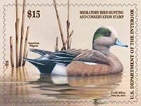 American Wigeon Duck Stamp